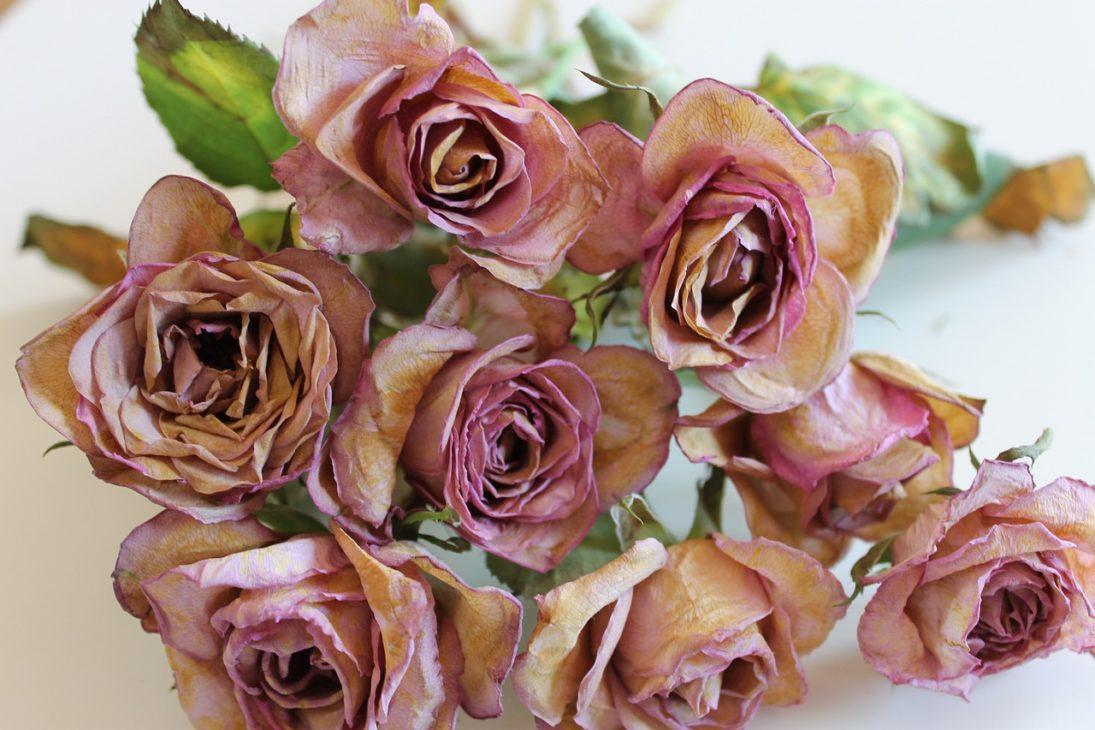 バラの花の香り成分はうつ病に効果があると実証されました!