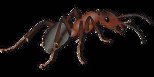 昆虫は食料危機を解決する栄養源