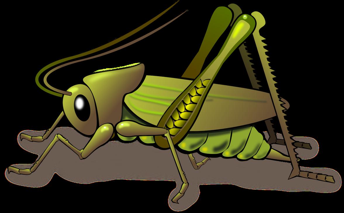 昆虫食ブーム来る?虫が苦手でも美味と思う昆虫はある?