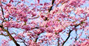 日本の教育の特徴