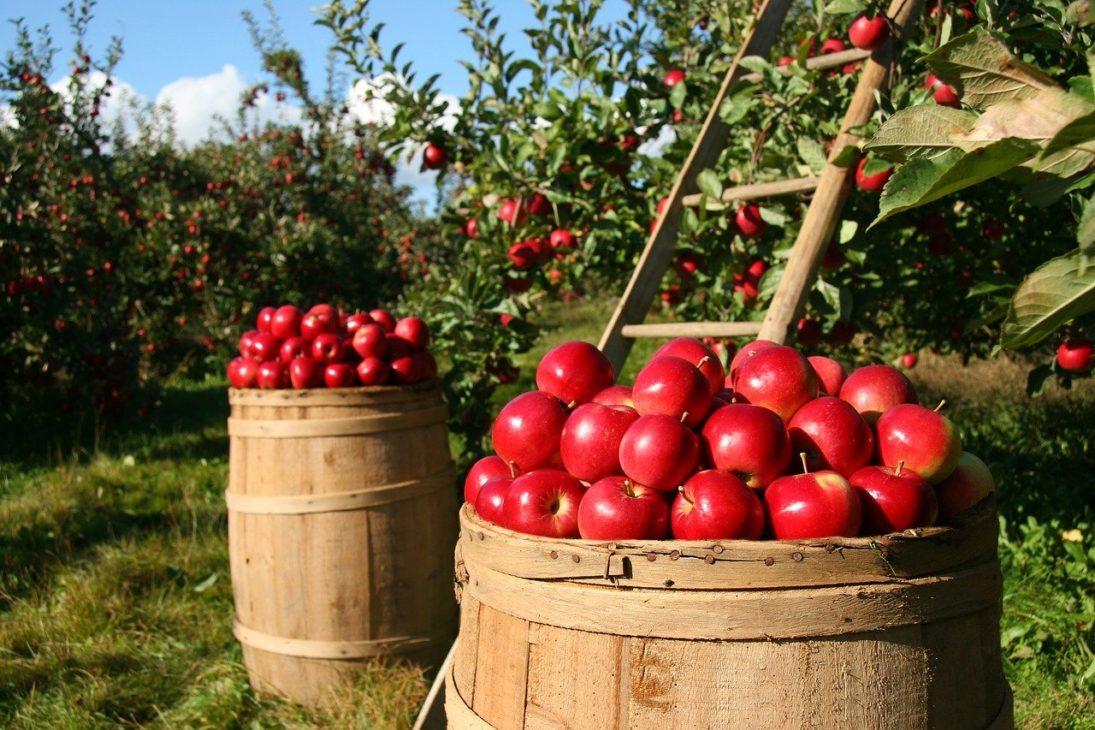 減農薬で酸化防止剤不使用のおいしい「りんごジュース」が飲みたい!