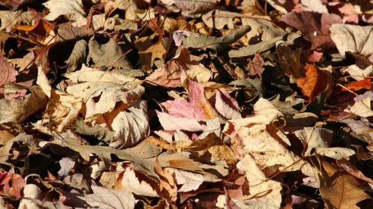落ち葉はゴミとして捨てずに腐葉土にして活用しよう